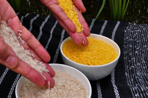 !1280px-Golden_Rice