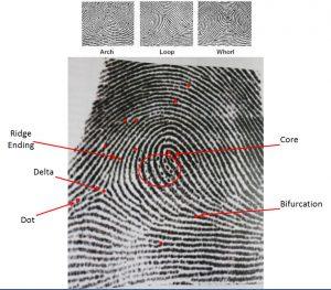 fingerprinting copy